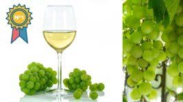 Mejor vino blanco que hay