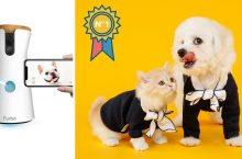 La Mejor Cámara de Vigilancia para Mascotas 2020